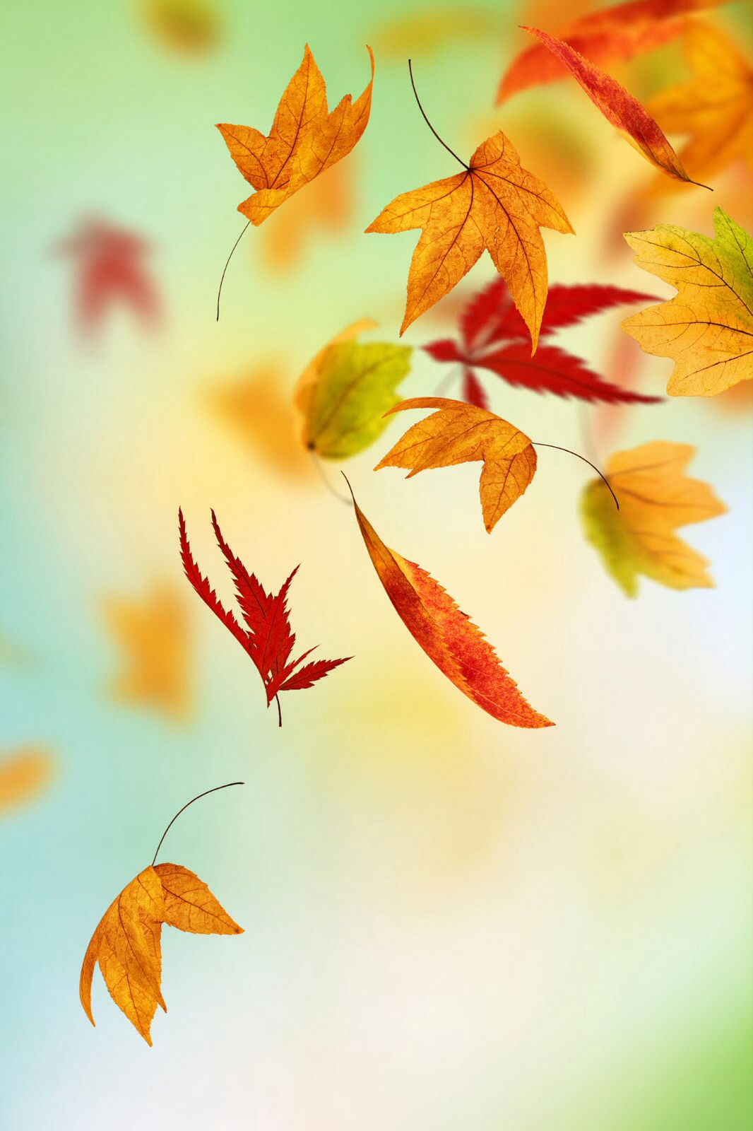 Fall Leaves Iphone Background Fall Leaves Phone Background