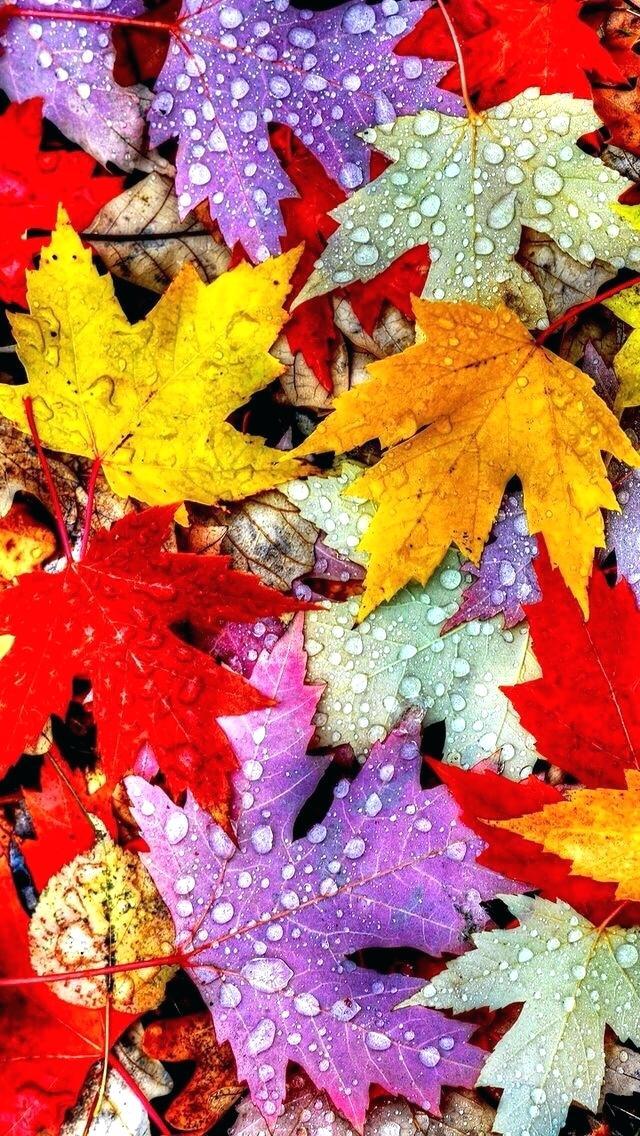 Fall Leaves Iphone Wallpaper Colorful Autumn Leaf Hd Fall