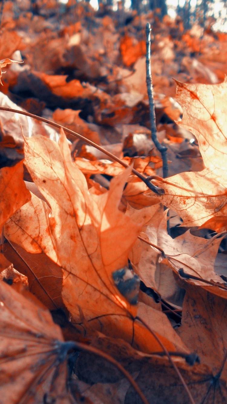 Branch, Autumn, Leaves, Deciduous, Tree Wallpaper For - Wallpaper , HD Wallpaper & Backgrounds