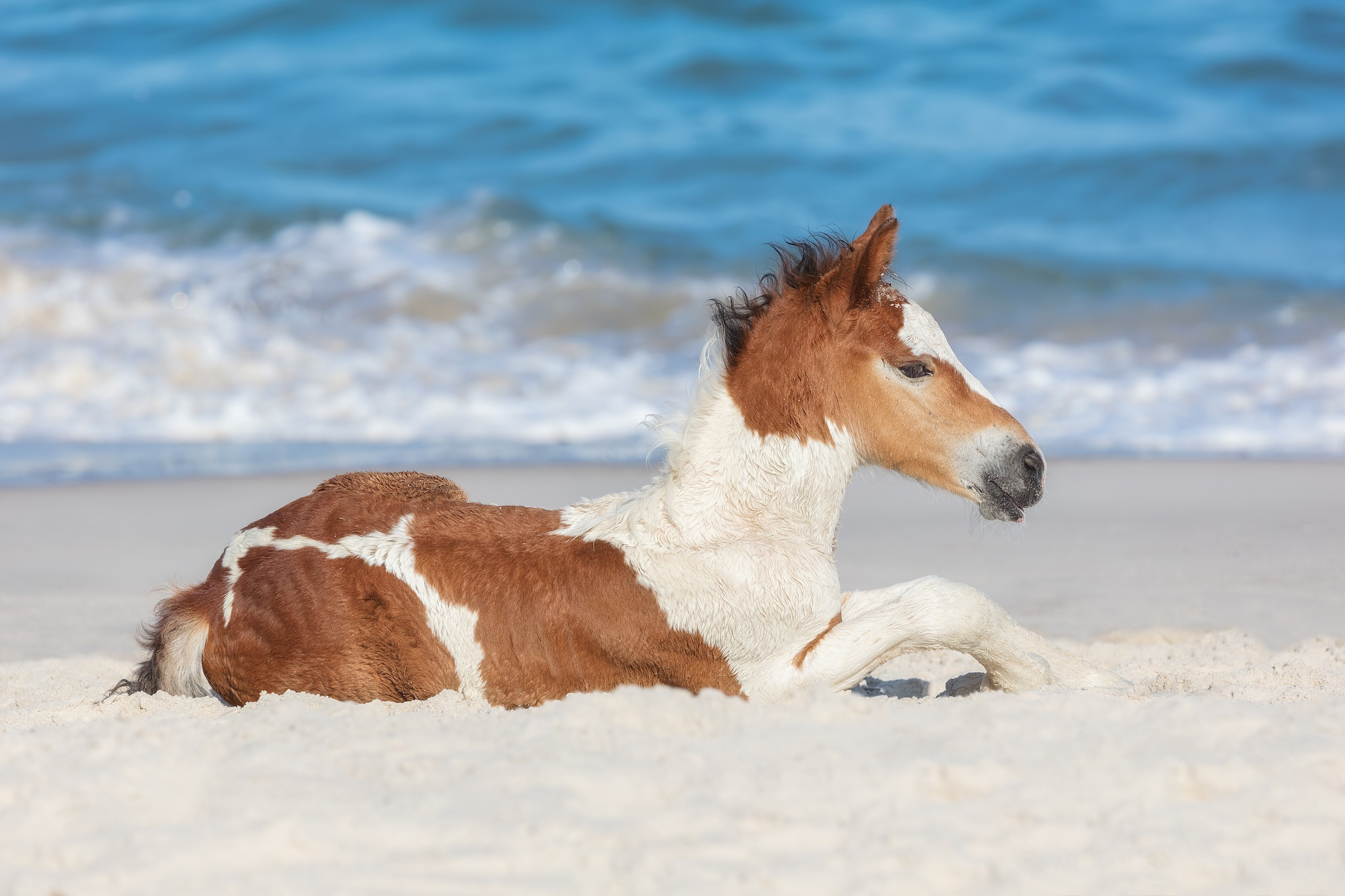 Baby Animal Horse Foal Wallpaper And Background Foal 1963569 Hd Wallpaper Backgrounds Download