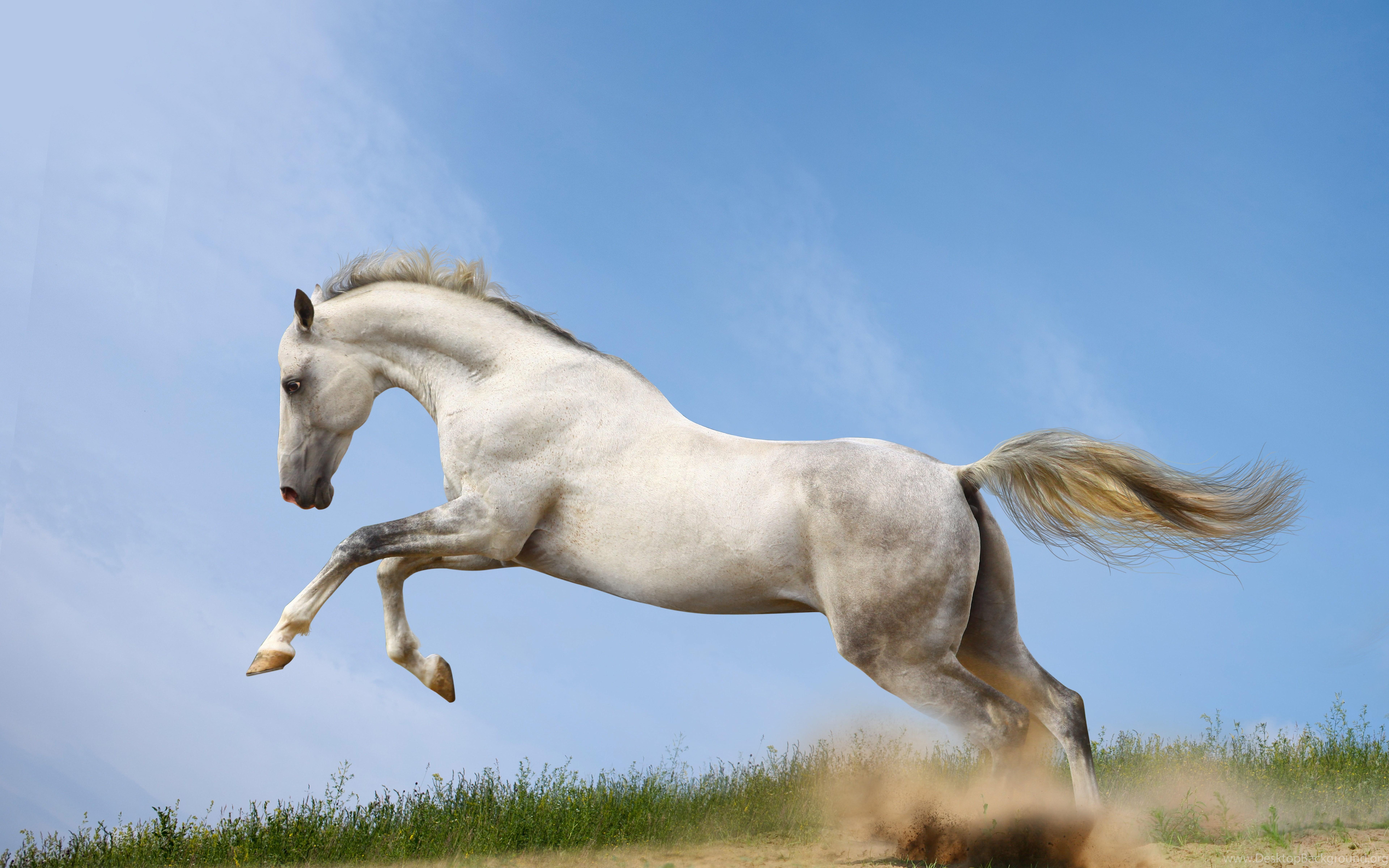 Beautiful Horse Fast Art Running Desktop Hd Wallpaper Running