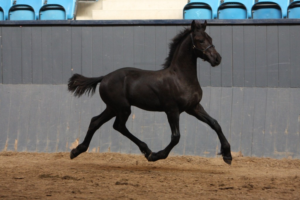 Cute Black Horse Names