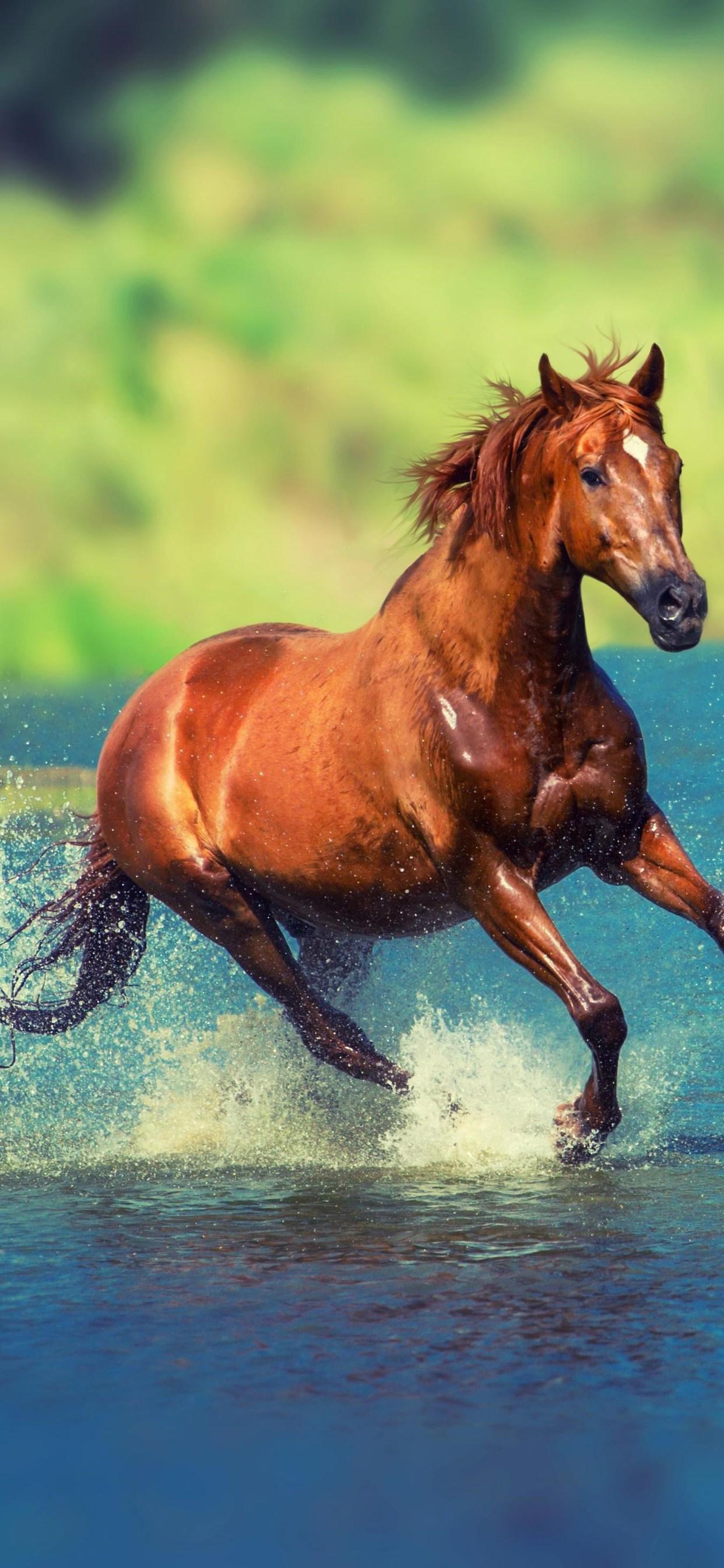 Running Horse In Water Wild Horses 1963929 Hd Wallpaper Backgrounds Download