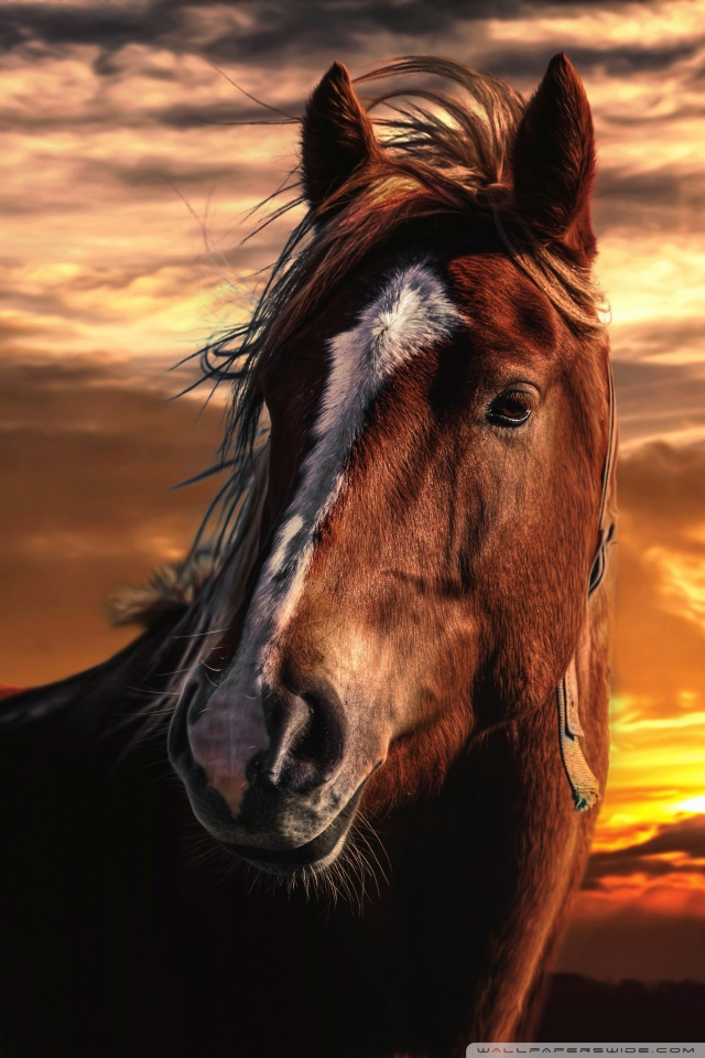 Mobile Hvga Horse Wallpaper Portrait 1964014 Hd Wallpaper