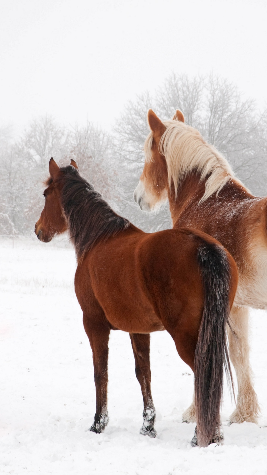 Wallpaper Horse Winter Snow Couple Horse Wallpapers Hd Iphone 1964065 Hd Wallpaper Backgrounds Download