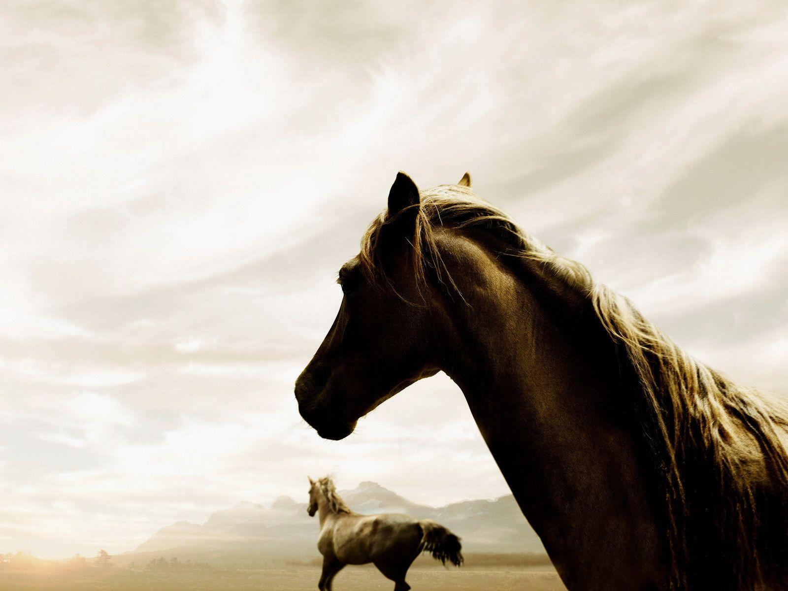 Fire Horse , HD Wallpaper & Backgrounds
