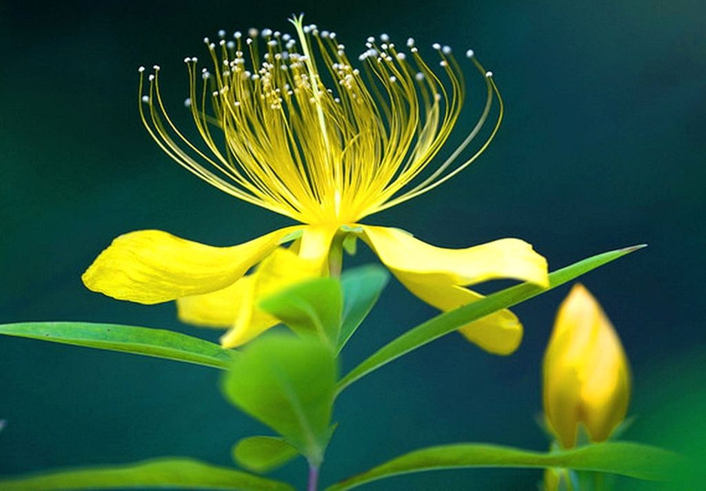 More Wallpaper Collections - Flower Images Full Hd Download , HD Wallpaper & Backgrounds
