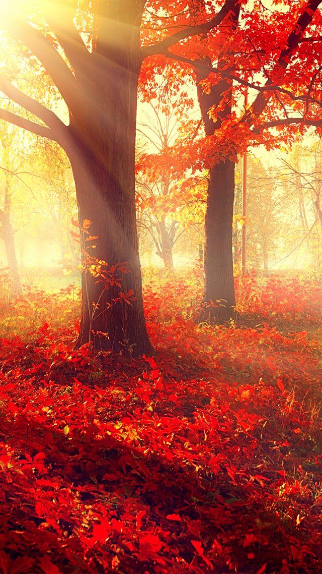 Park, 5k, 4k Wallpaper, Autumn, Beautiful, Leaves, - Re Max Fall Back , HD Wallpaper & Backgrounds