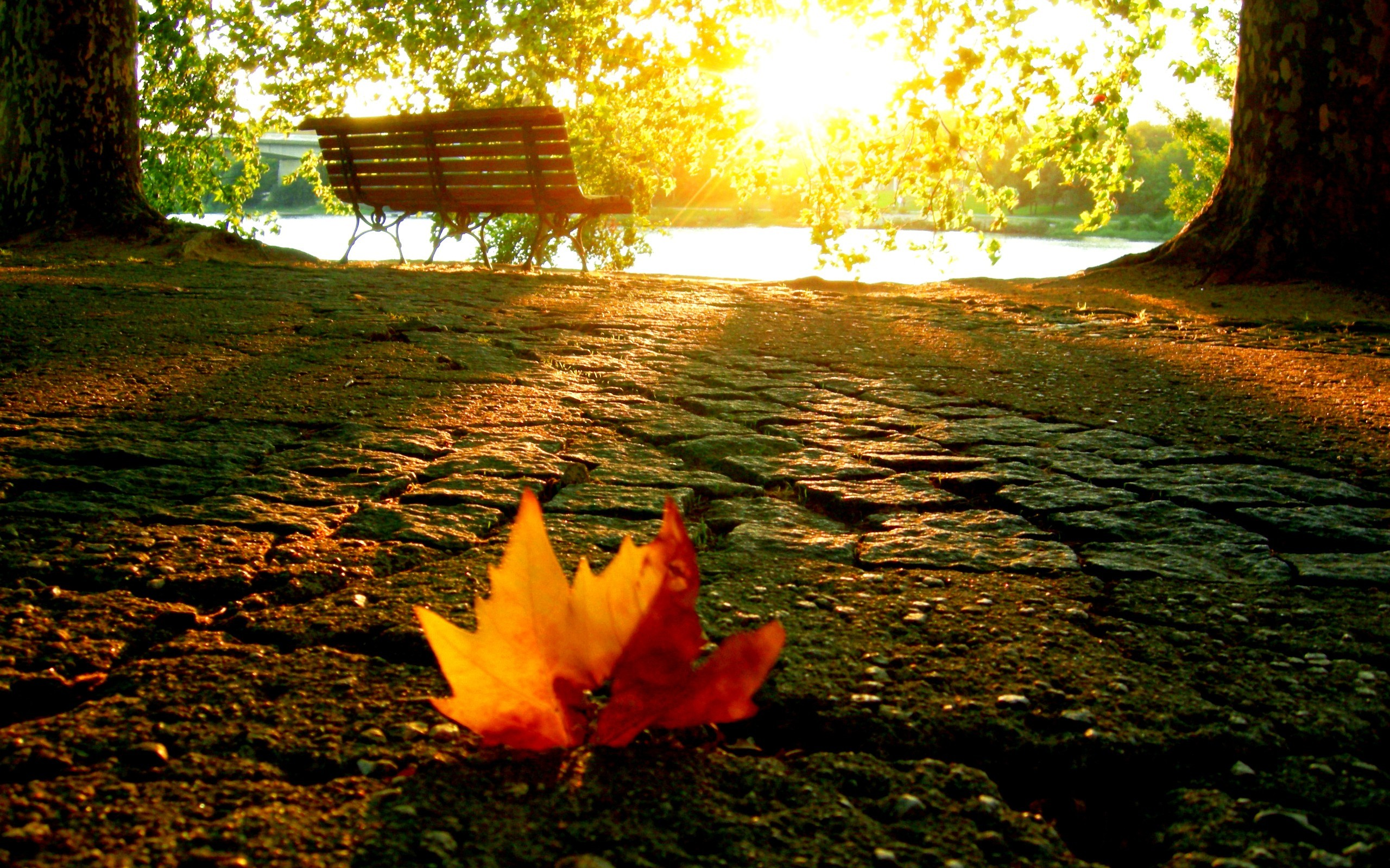 Beautiful, Leaf,a In, The,mobile, Nature Wallpaper - Falling Leaves , HD Wallpaper & Backgrounds