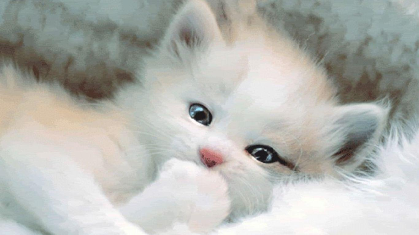 Wallpapers For Cute White Cat Wallpaper Cute Black And White Kittens 20679 Hd Wallpaper Backgrounds Download