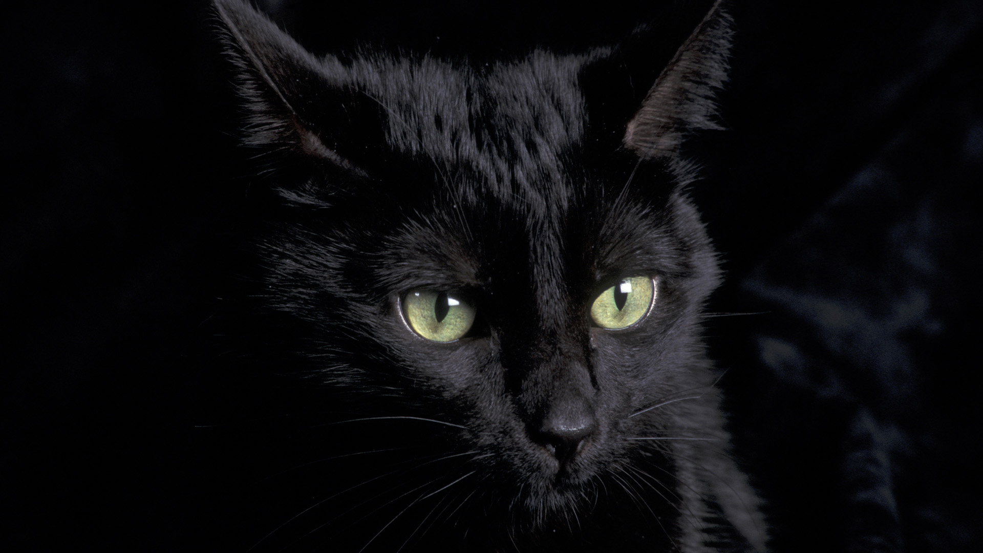 Black Cat Face Drawing 21141 Hd Wallpaper Backgrounds Download