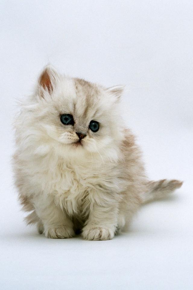 Cute Adorable Cat 21414 Hd Wallpaper Backgrounds Download