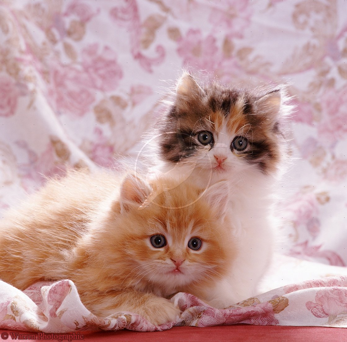 Cute Dog And Cat Wallpaper Cute Cats Photos Kittens 22556 Hd Wallpaper Backgrounds Download