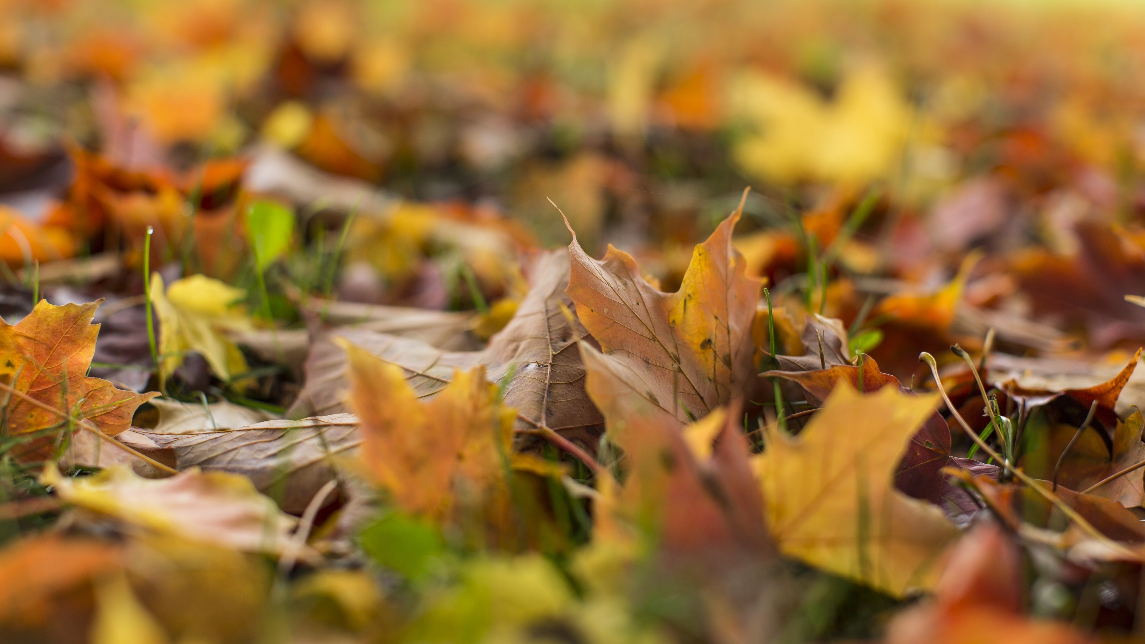 Fall Hd Backgrounds For Ultra Hd 4k Desktop Happy Fall Friday 2007342 Hd Wallpaper Backgrounds Download