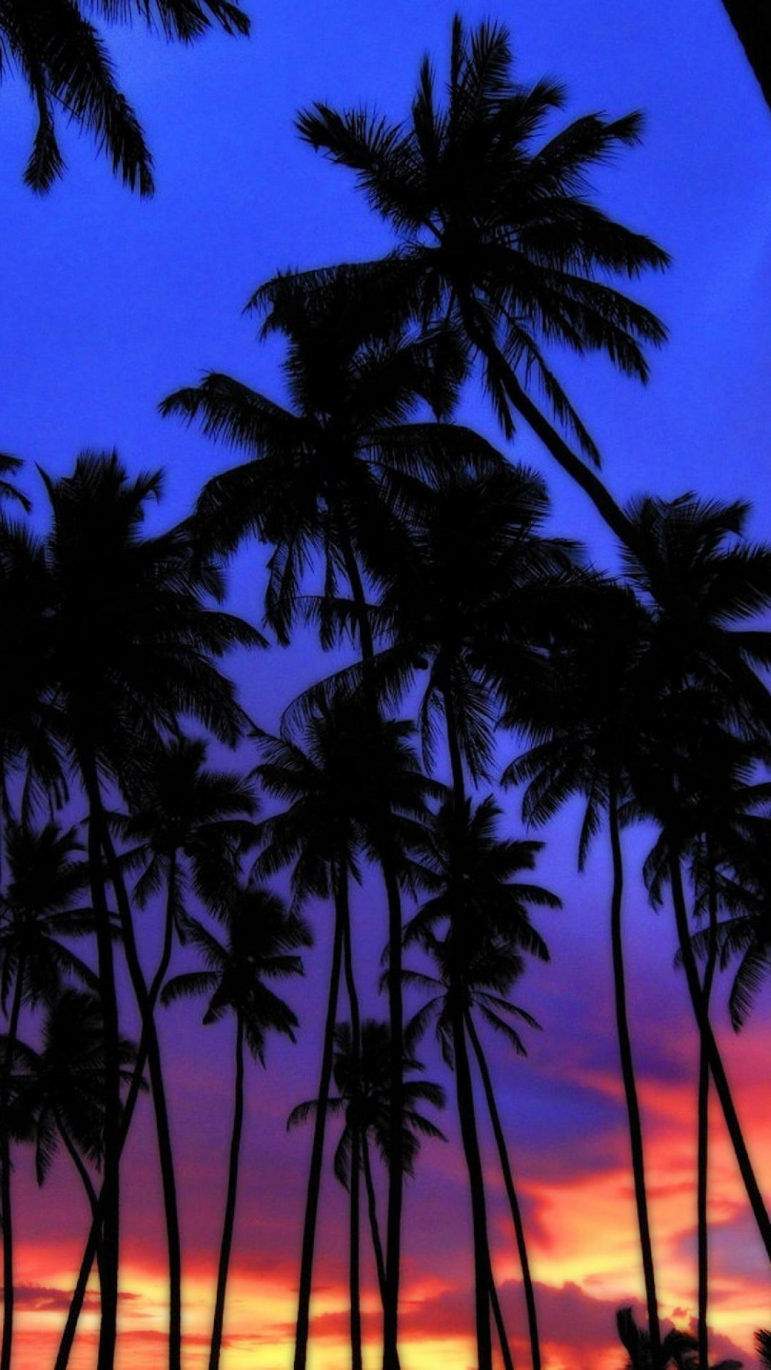 Sunset Wallpapers Palm Trees , HD Wallpaper & Backgrounds