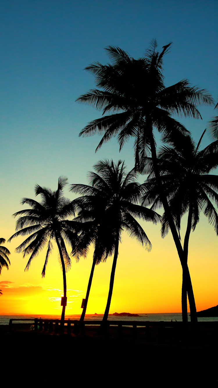 Palm Trees, Tree, Tropics, Printing, Sunset Wallpaper - Palm Tree Sunset Wallpaper For Phone , HD Wallpaper & Backgrounds