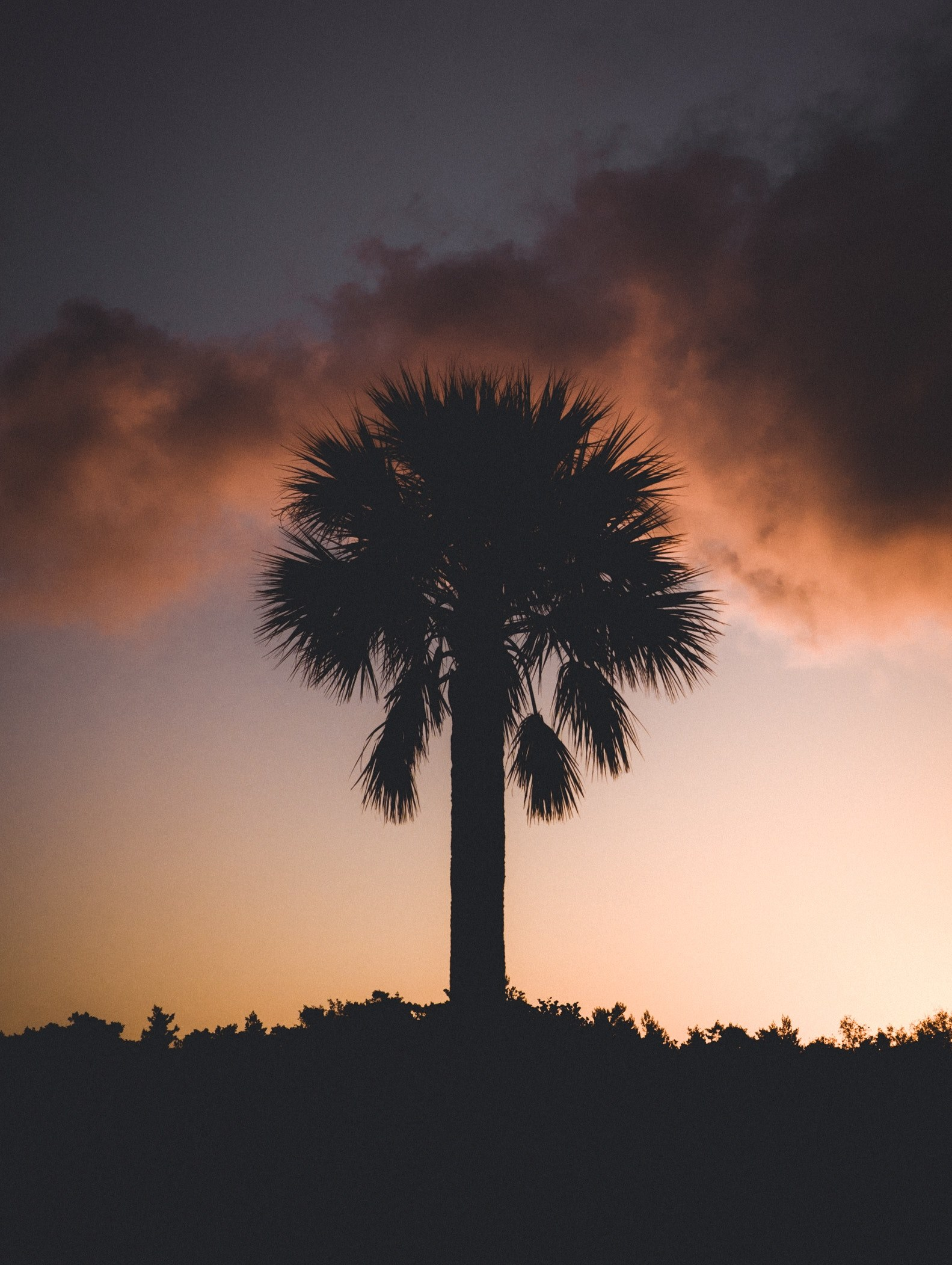#1583x2103 Palm Tree Sunset Wallpaper And Background - Cb Editings Background In Full Hd , HD Wallpaper & Backgrounds