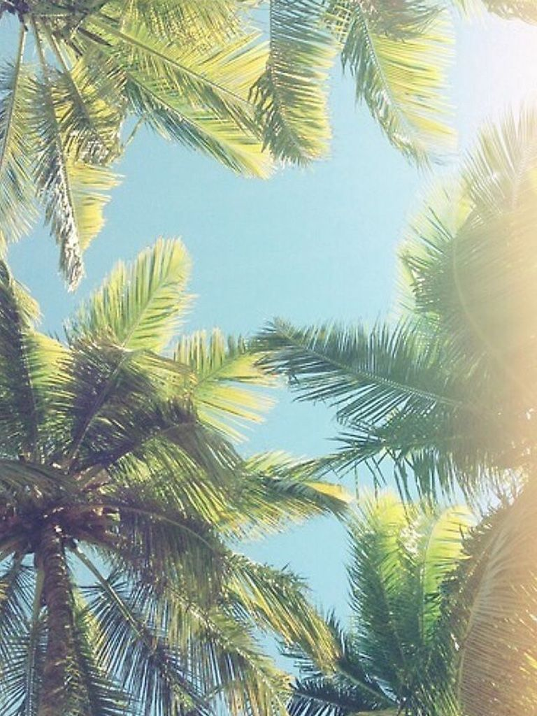 Stunning California Pictures [scenic Travel Photos] - Coconut Tree Wallpaper Iphone , HD Wallpaper & Backgrounds