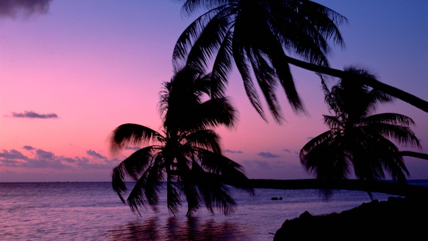 Landscape / Sunset Palm Trees Wallpaper Shine - Coucher De Soleil Palmier , HD Wallpaper & Backgrounds