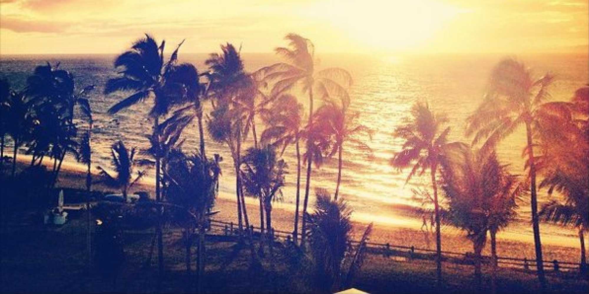 Palm Trees Sunset Tumblr Iphone Wallpaper Lovethispic - Los Angeles Palm Trees Photography , HD Wallpaper & Backgrounds