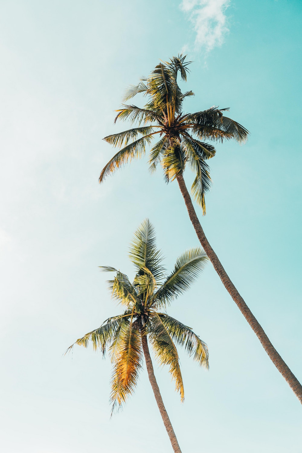 Palm Tree Wallpaper - Palm Tree Phone Background , HD Wallpaper & Backgrounds