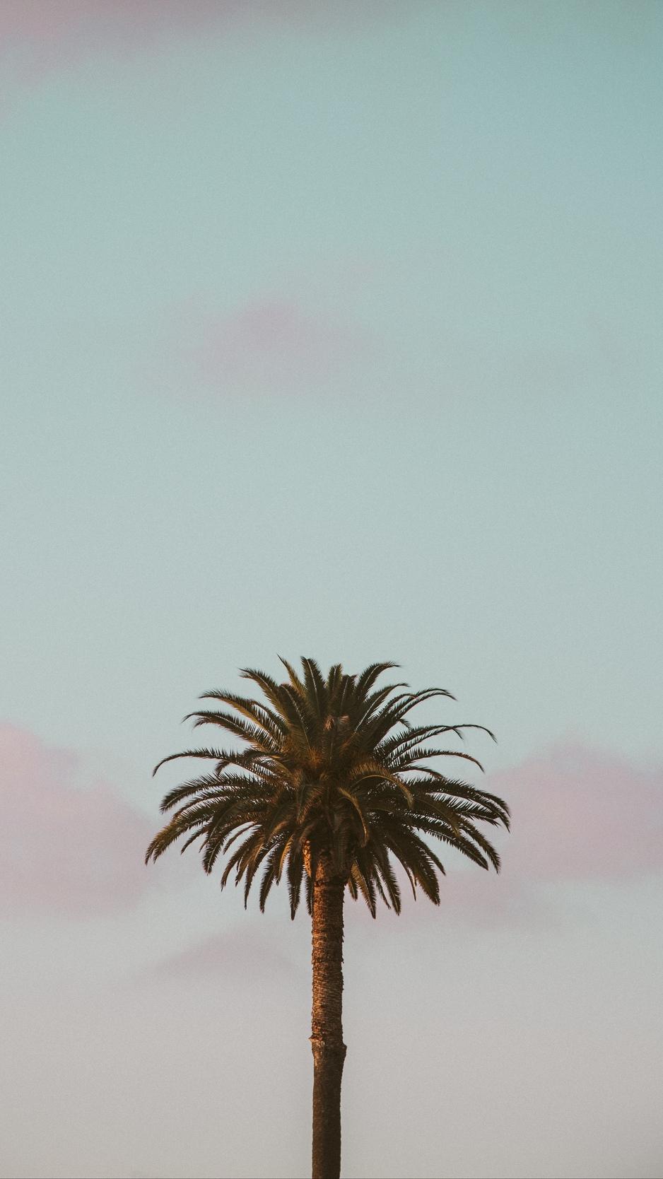 Wallpaper Palm Tree, Tropics, Minimalism, Sky - Minimal Wallpaper Palm Trees , HD Wallpaper & Backgrounds