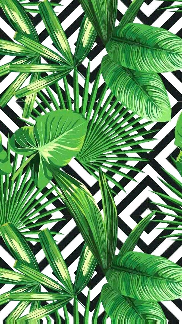 Palm Tree Leaves Wallpaper Pin By On Wallpaper Wallpaper - Tropical Leaf Wallpaper Iphone , HD Wallpaper & Backgrounds