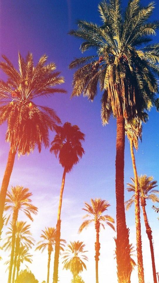 California Palm Trees Wallpaper - California Wallpaper Palm Trees , HD Wallpaper & Backgrounds