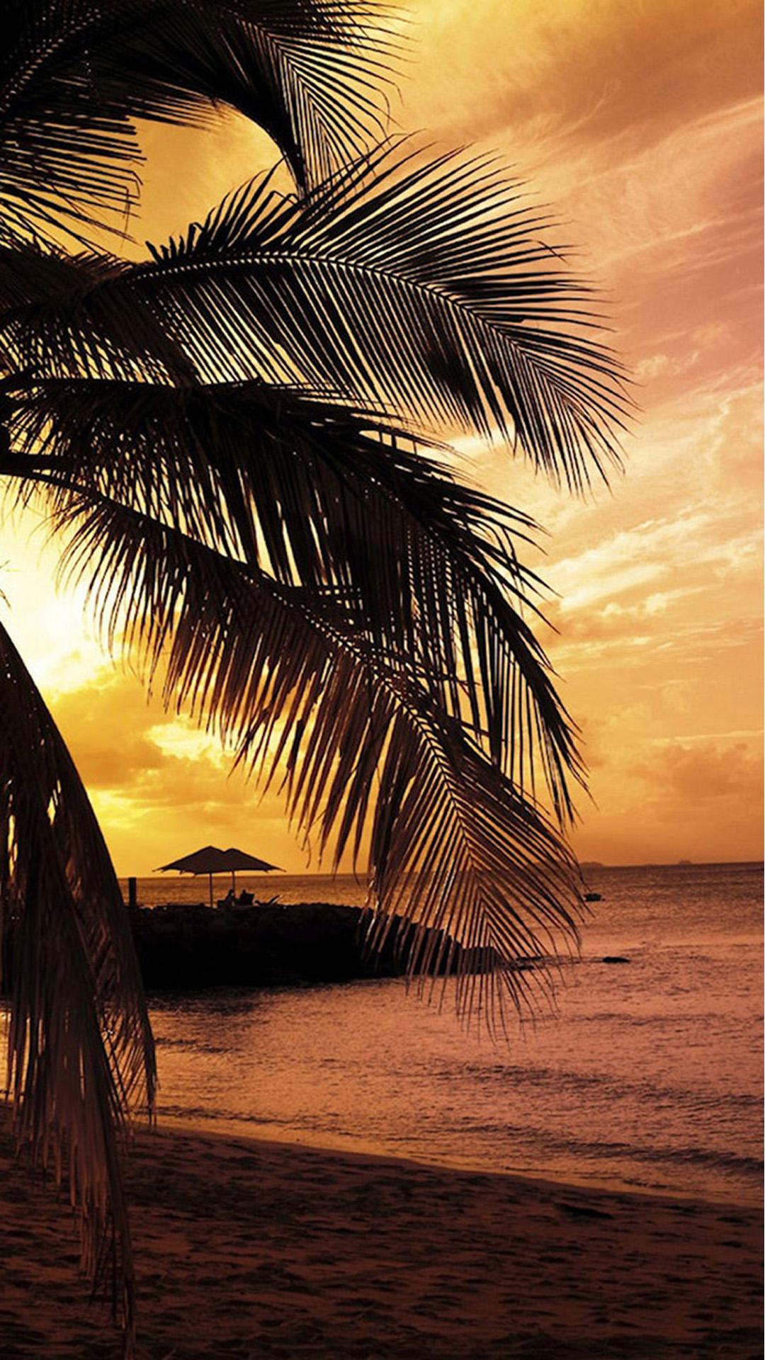 Palm Tree Sunset , HD Wallpaper & Backgrounds
