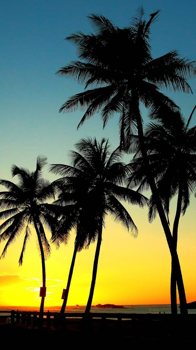 Sunset And Palm Tree , HD Wallpaper & Backgrounds