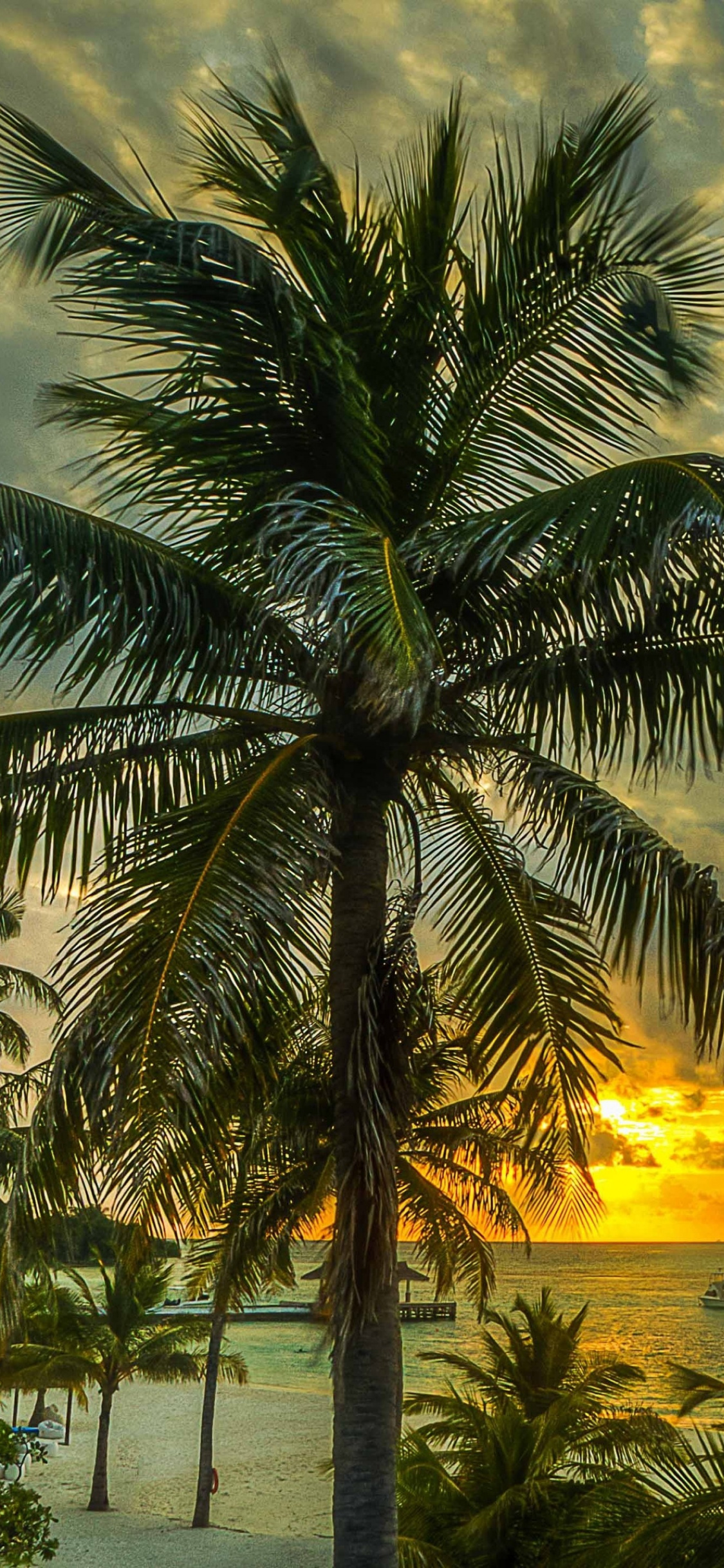 Tropics, Palm Tree, Vegetation, Date Palm, Tree Wallpaper - Обои Пальмы На Айфон , HD Wallpaper & Backgrounds