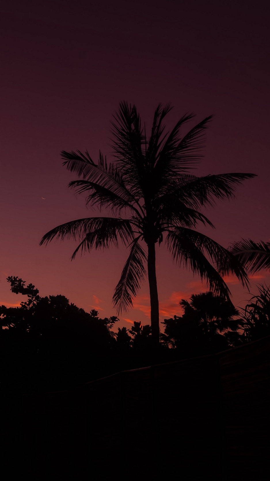 Wallpaper Palm Tree, Night, Sky, Branches - Palm Tree Night Sky , HD Wallpaper & Backgrounds