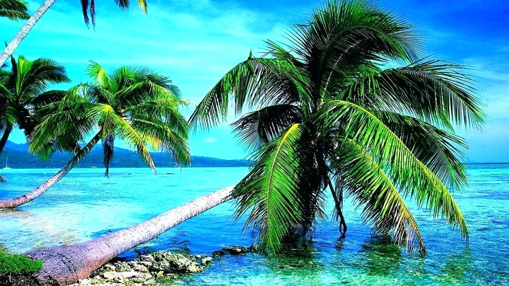 Palm Trees Wallpapers Tree Wallpaper Iphone Plus Palm