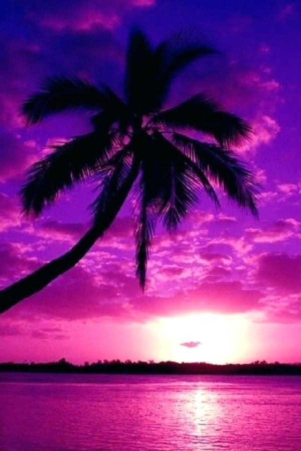 Pink Palm Tree Wallpaper Purple Tree Wallpaper Tree - Palm Tree Purple Sunset , HD Wallpaper & Backgrounds