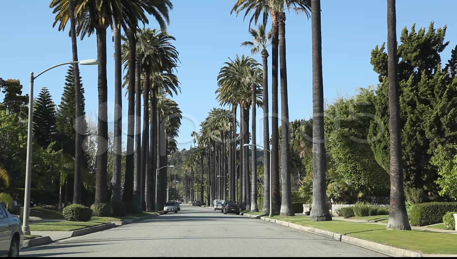 California Palm Trees Wallpaper - Los Angeles Palm Tree Road , HD Wallpaper & Backgrounds