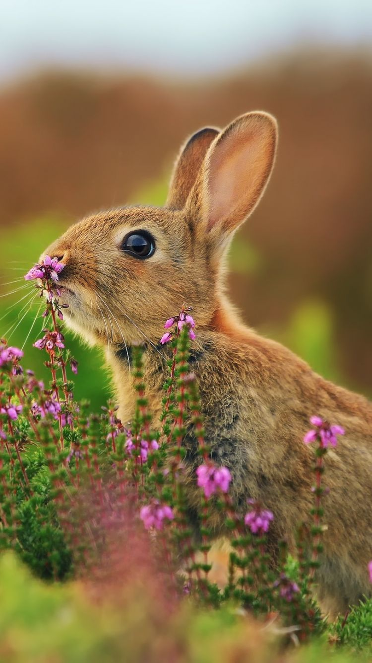 Cute Rabbit Wallpapers Pictures Photos Images Of Bunny