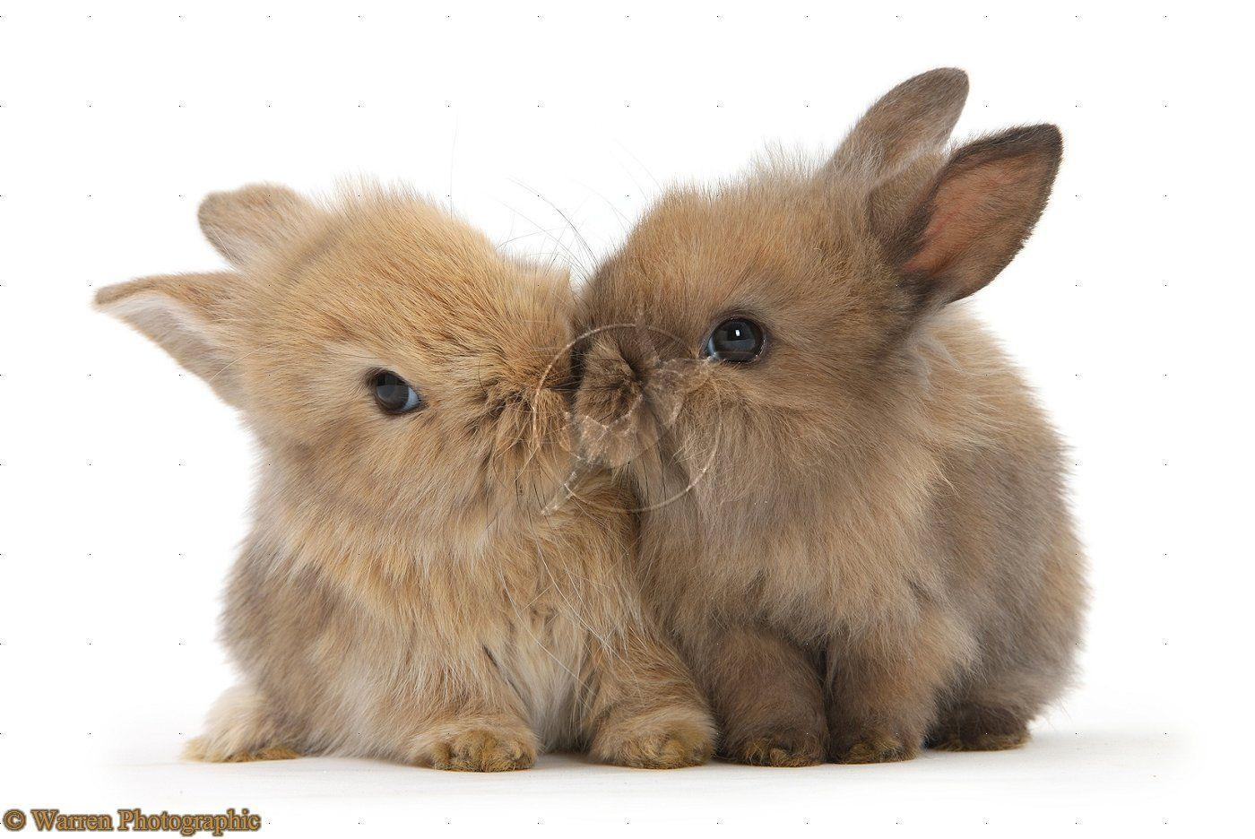 Wallpapers For Cute Baby Bunny Wallpapers Good Night