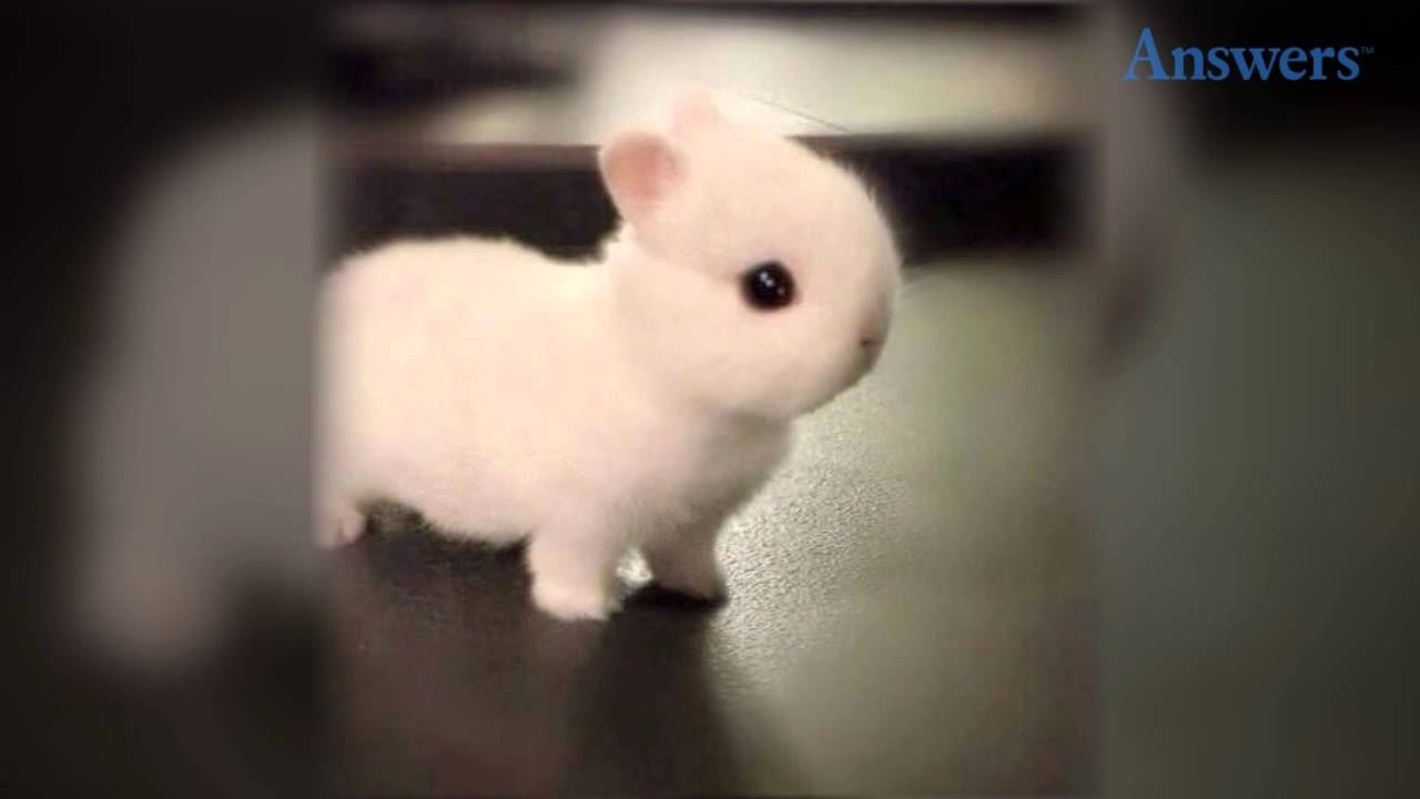 10 Most Popular Cute Baby Bunny Images Full Hd 1920×1080 ...