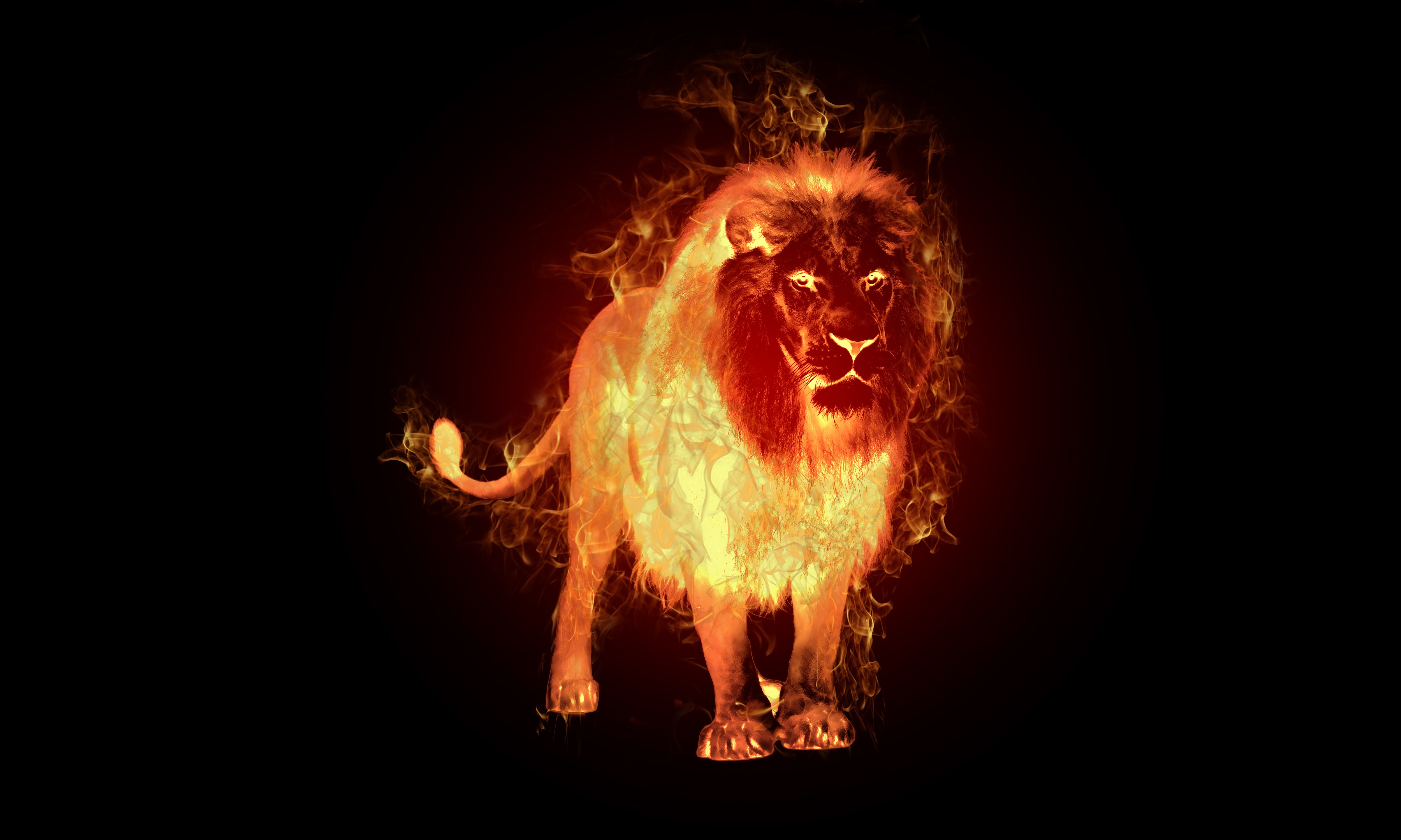 Fire Lion Wallpapers Top Free Fire Lion Backgrounds - Fire Lion , HD Wallpaper & Backgrounds