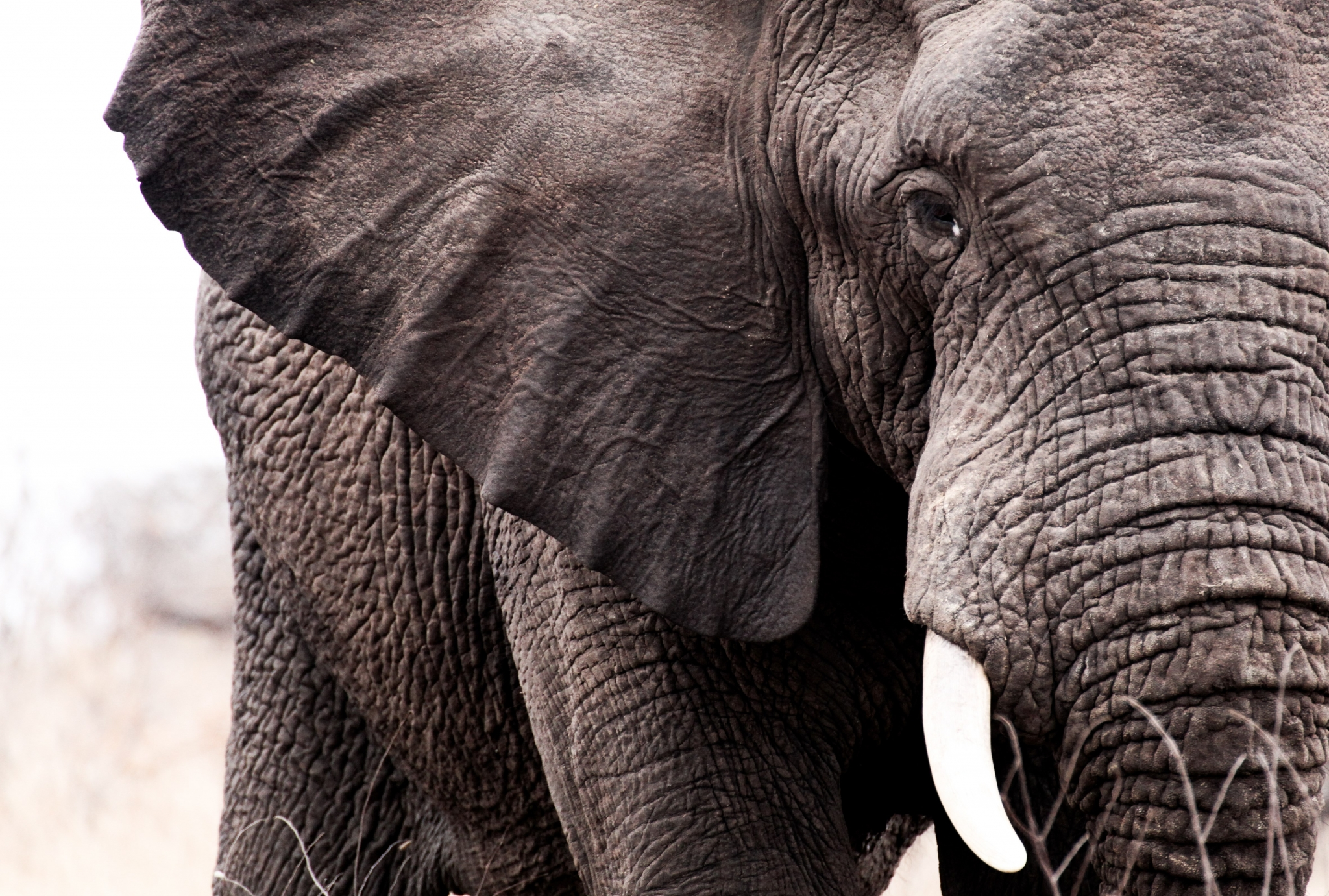 Elephant Wallpaper Hd Pack African Elephant Close Up