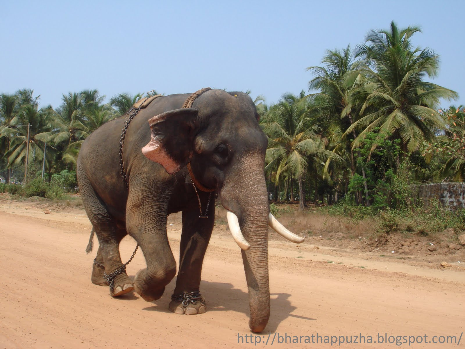Kerala Elephant Wallpaper Kerala Elephant 2012527 Hd