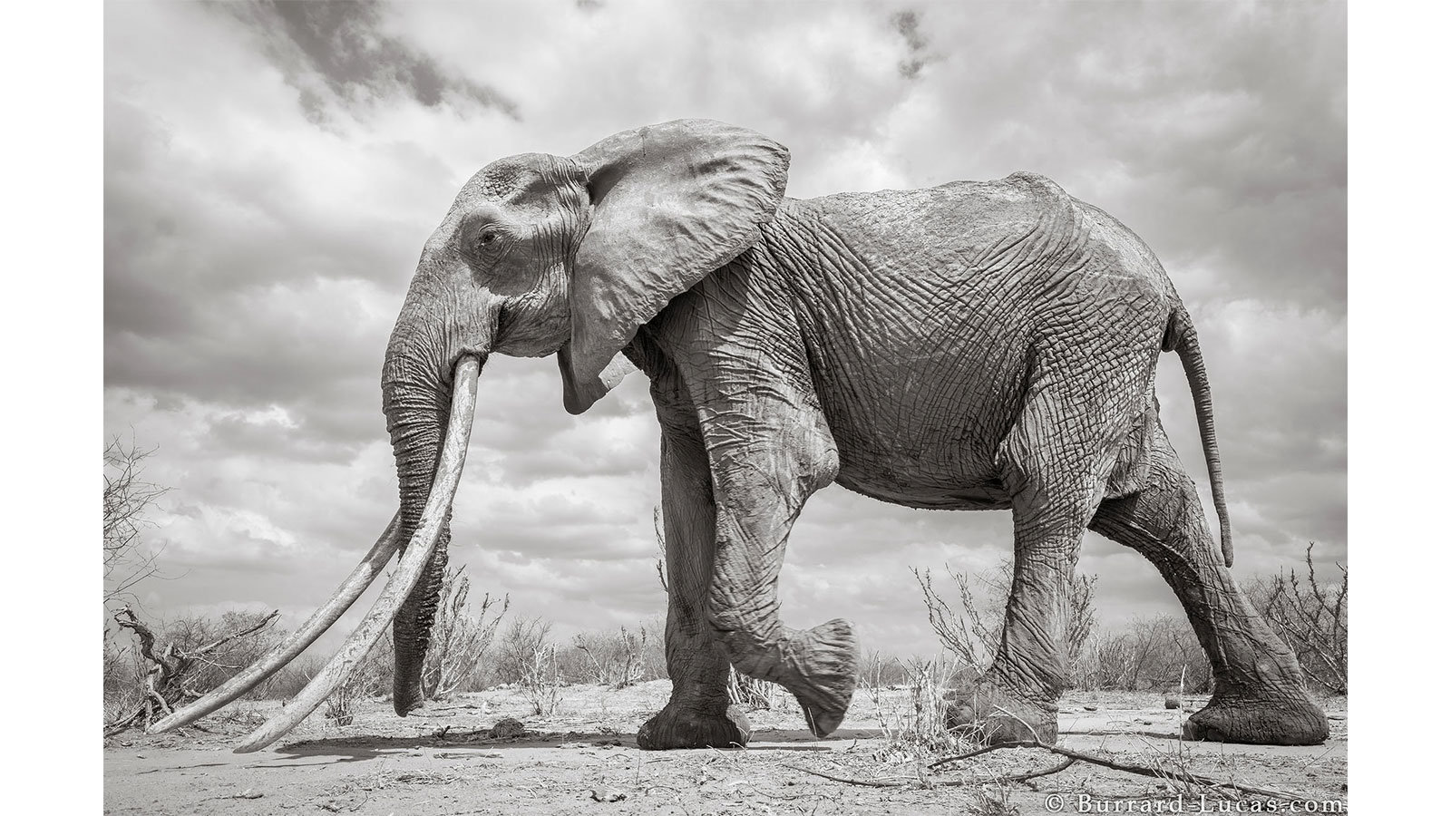 3d elephant mural