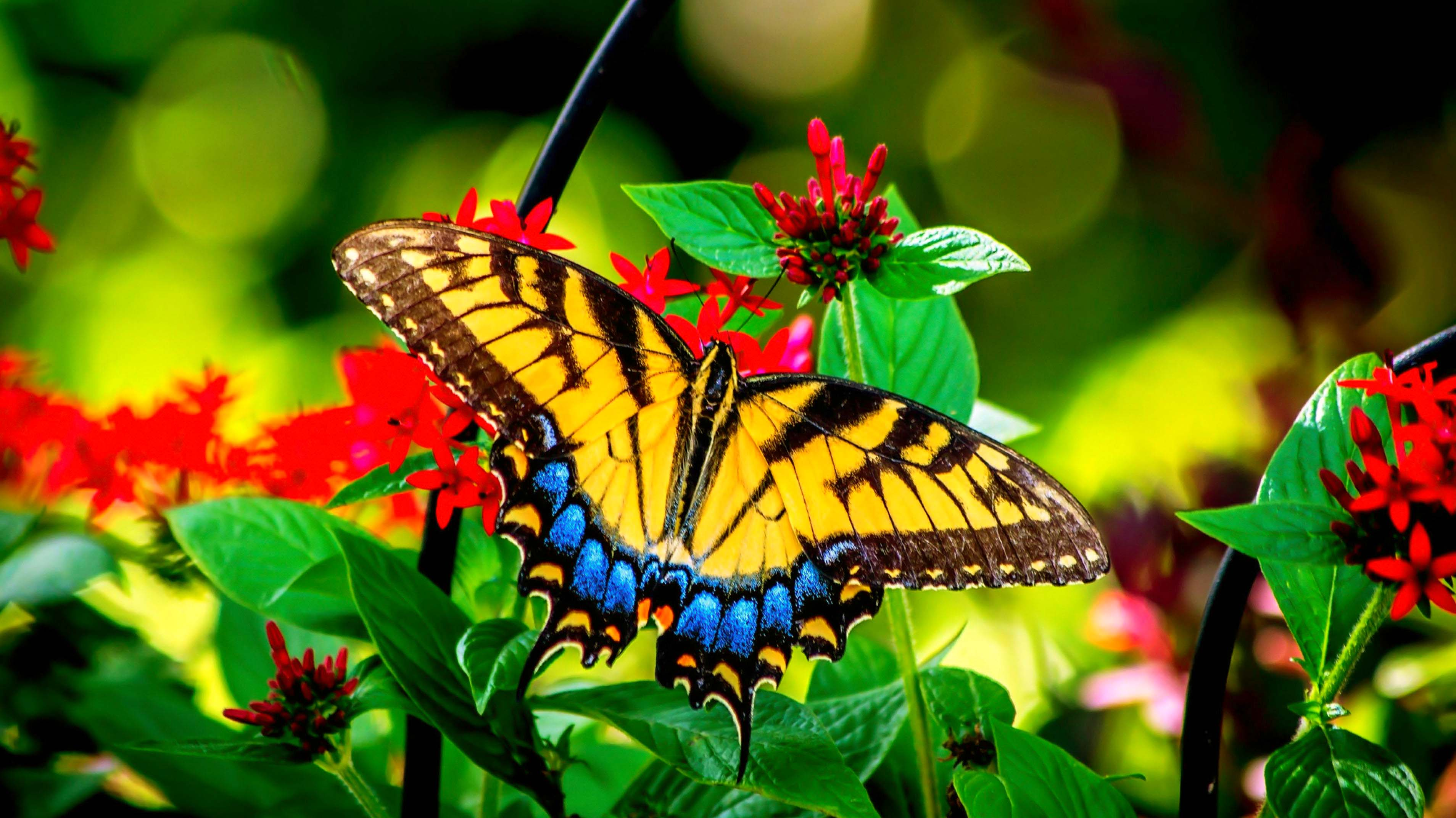 Colorful Butterfly On Flower , HD Wallpaper & Backgrounds