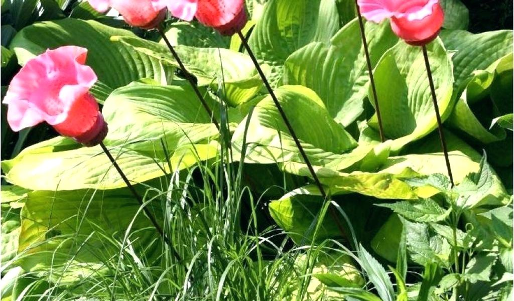 Diy Stained Glass Garden Art Unique Flower Sun Catcher - Sprenger's Tulip , HD Wallpaper & Backgrounds