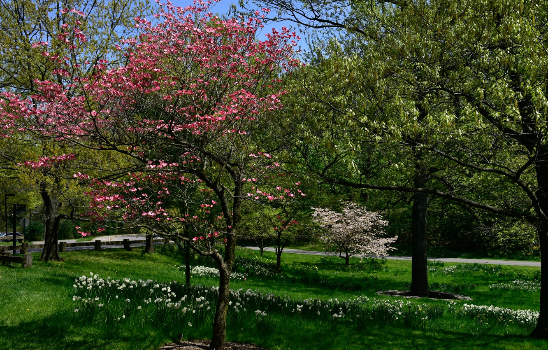 Photo Wallpaper Greens, Grass, Trees, Flowers, Park, - Grove , HD Wallpaper & Backgrounds
