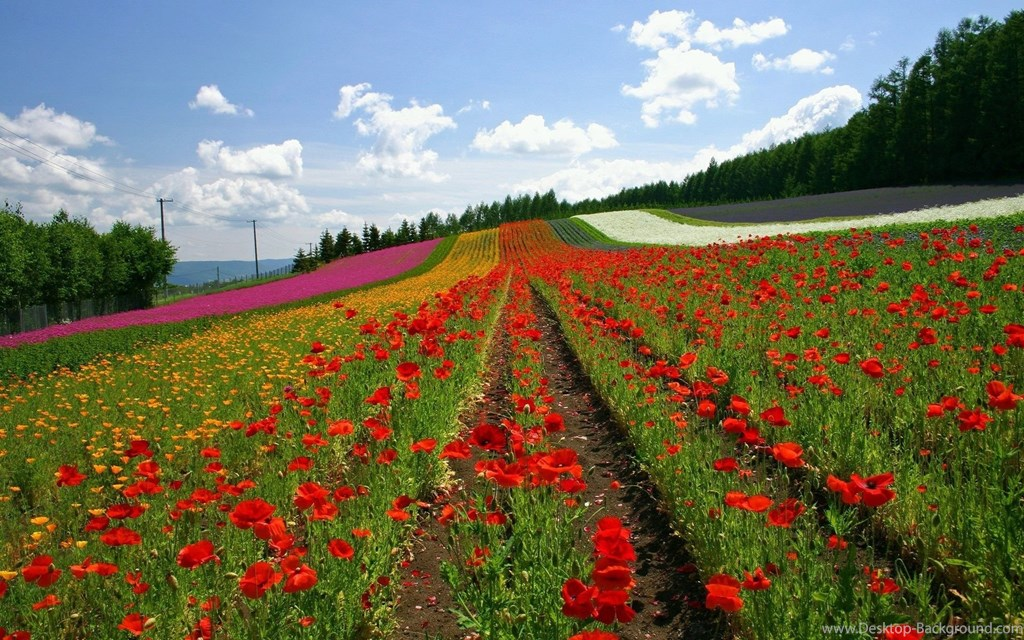 Wallpapers Beautiful Flowers Gardens Garden Widescreen - Furano , HD Wallpaper & Backgrounds