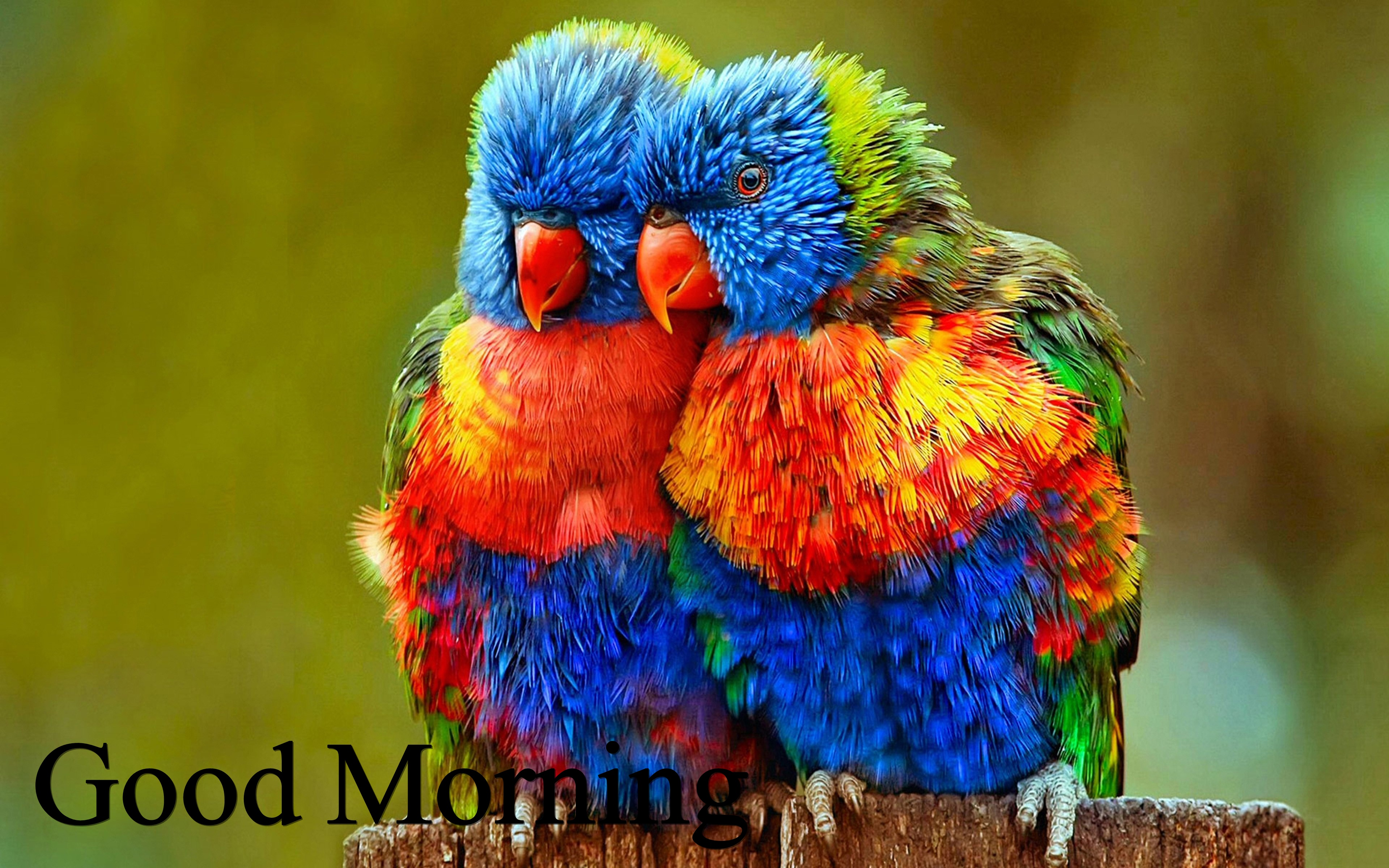 Good Morning Love Pair Birds Hd Wallpapers Full Hd Love Bird