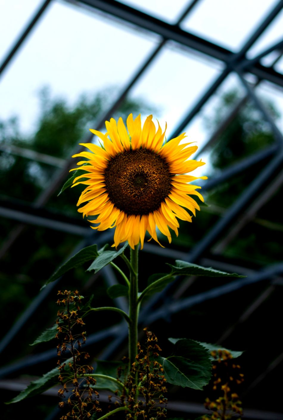 20 Sunflower Pictures Hq Download Free Images On Unsplash ...