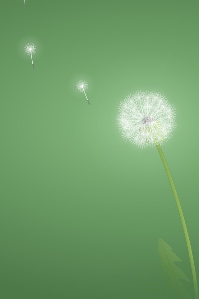 Iphone 4 4s Dandelion Wallpaper Iphone 2030792 Hd Wallpaper Backgrounds Download