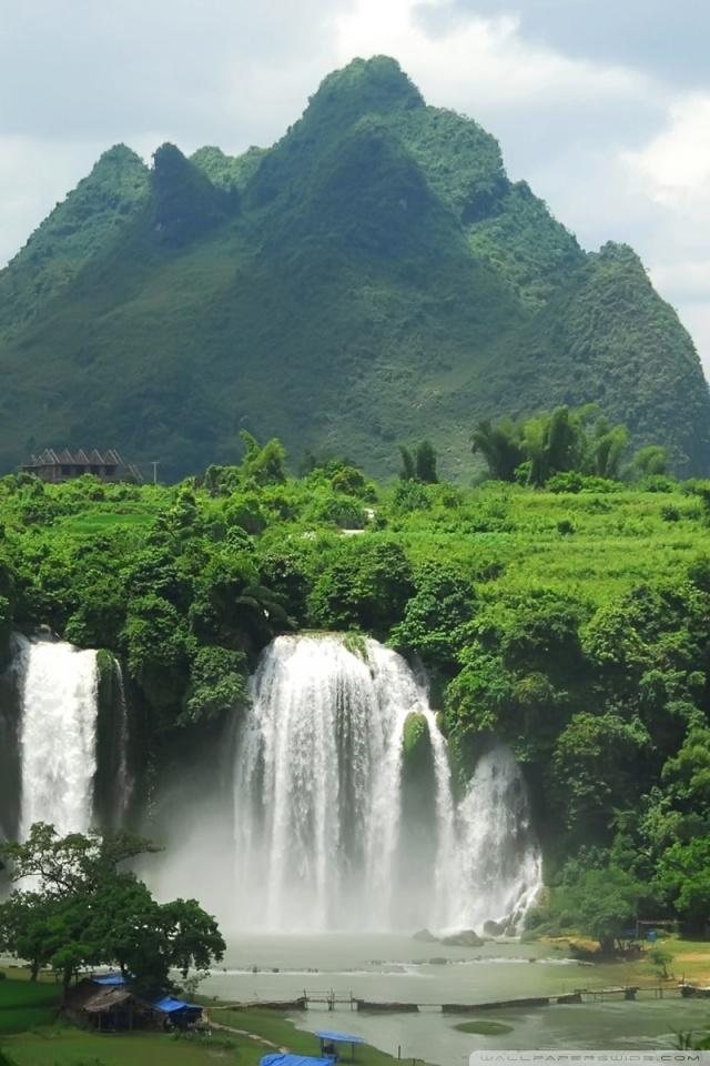 Mobile Hvga Tropical Rainforest Wallpaper Iphone 2032684